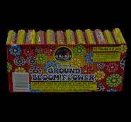 NOV-Ground-Bloom-Flower